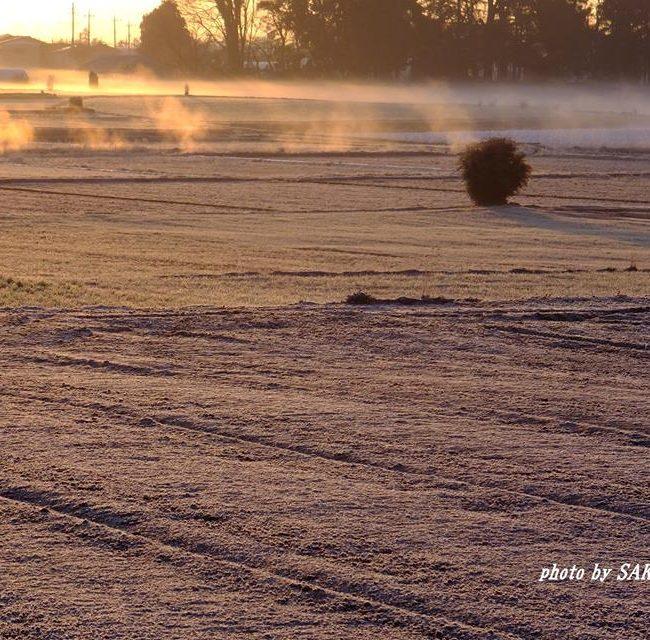 霜の畑 2015.2.22