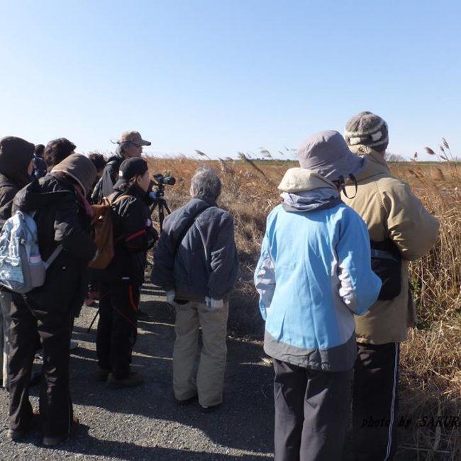 渡良瀬遊水地探鳥会 2014.12.7