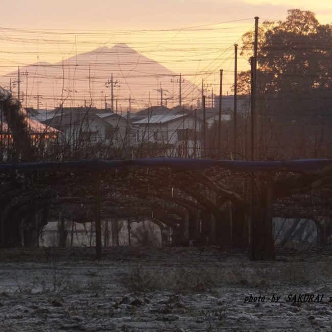 今朝の筑波山 2014.12.25