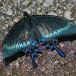逃げられない昆虫撮影に使える!! 1万円台の初心者用デジタル一眼用レンズ タムロン70-300mm