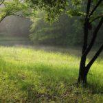 今朝の散歩中に出会った風景:池の霧 2014.6.20 栃木県小山市