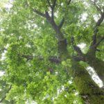 今朝の散歩中に出会った風景:温帯雨林 2014.5.2 栃木県小山市