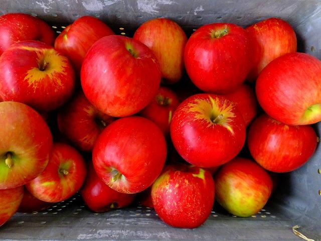 りんご、つがる